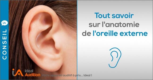 Anatomie oreille externe